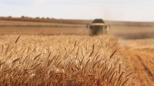 Edaphos agriculture