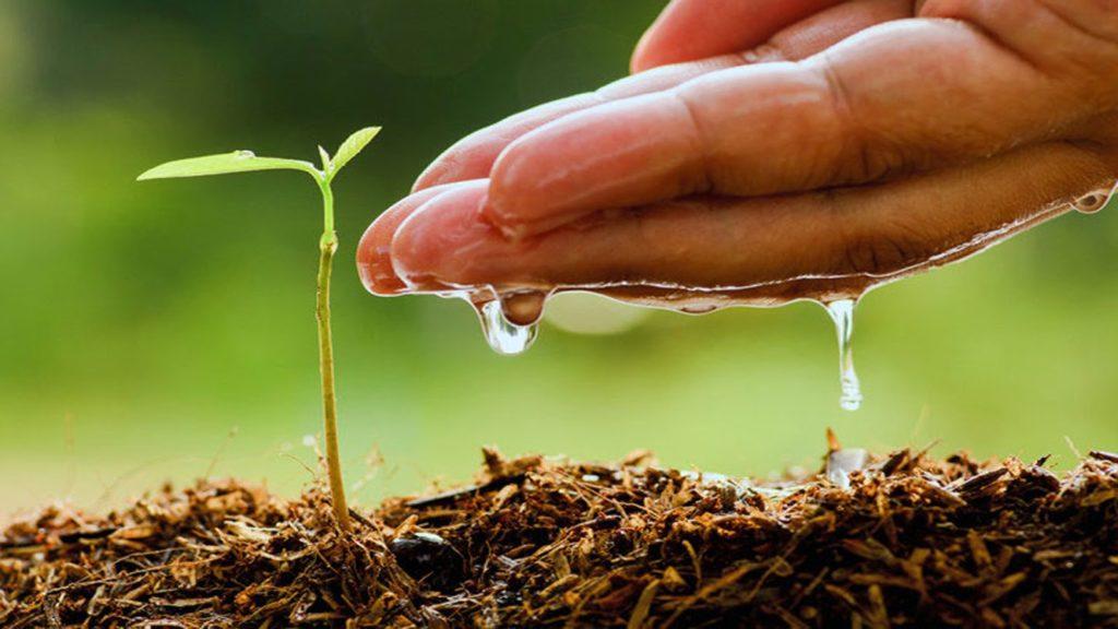 Edaphos soil fertility