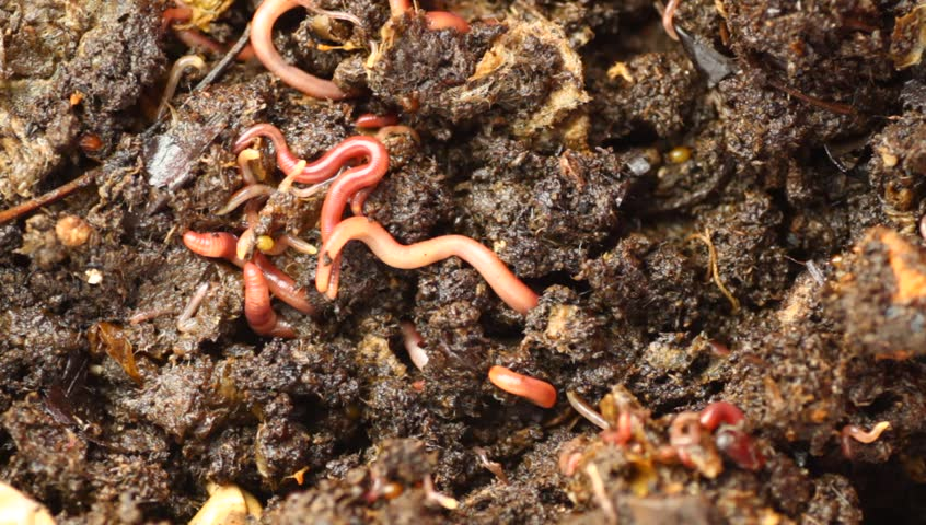 Edaphos compost