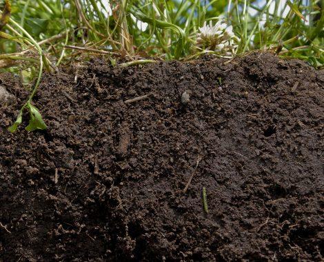 organic-soil.jpg