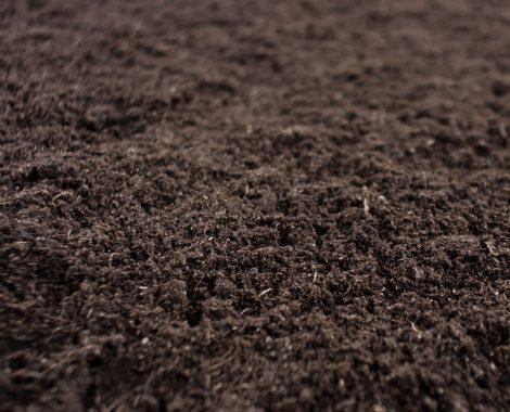 soil5.jpg