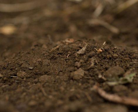 topsoil6.jpg